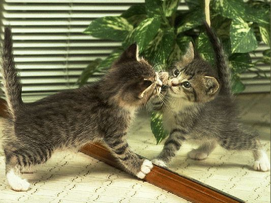 Animali gatti for Allontanare i gatti